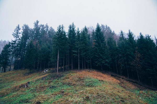 wald_blog1